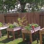 Patio Garden Boxes for Vegetables