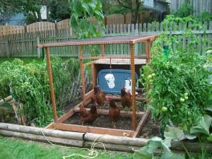 Patio Garden Ideas Vegetable
