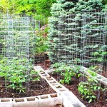 Patio Vegetable Garden Design