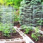 Patio Vegetable Garden Design