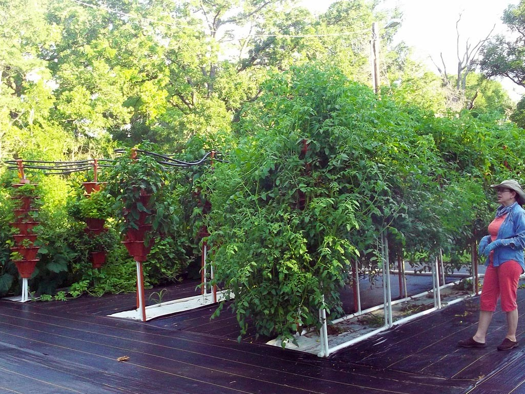Patio Vegetable Garden Kit