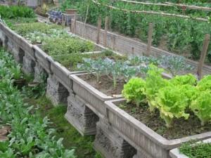 Patio Vegetable Garden Plans