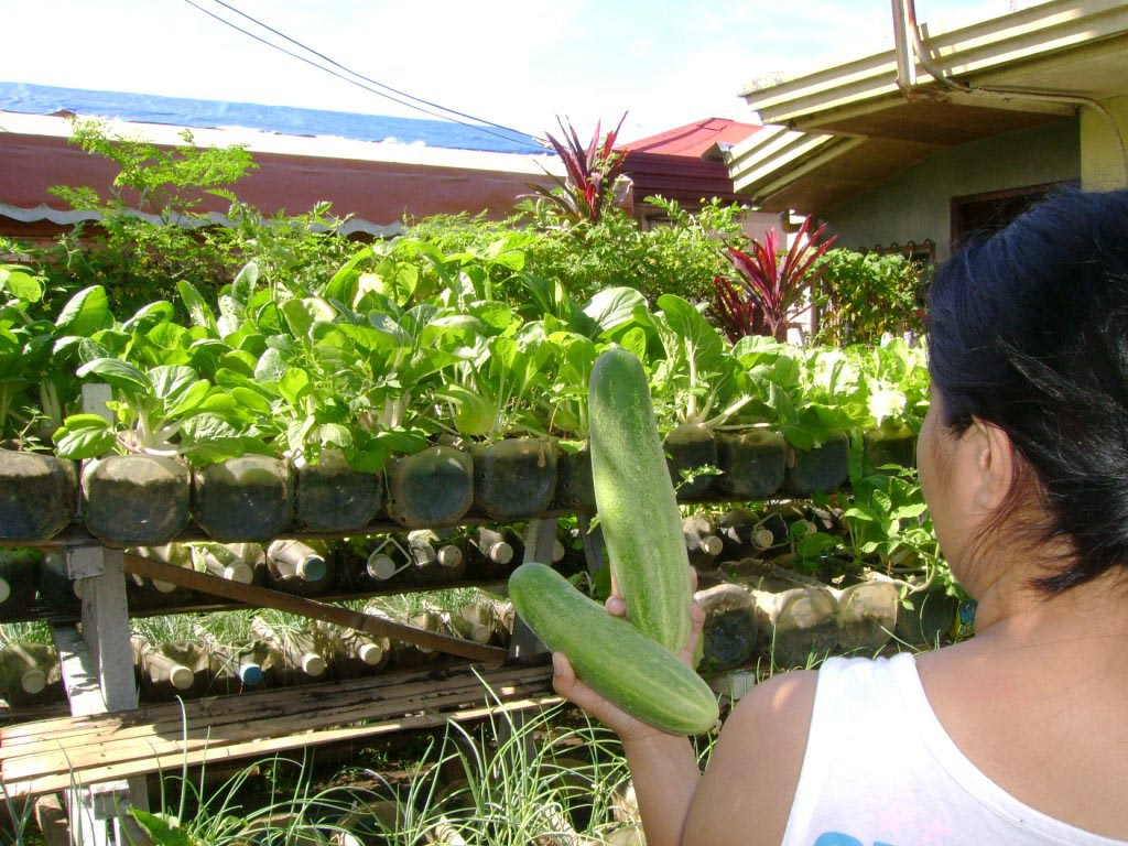Patio Vegetable Garden Planters