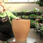 Patio Vegetable Gardening for Beginners