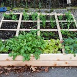 Planting Raised Vegetable Garden