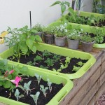 Planting Vegetable Garden Tips