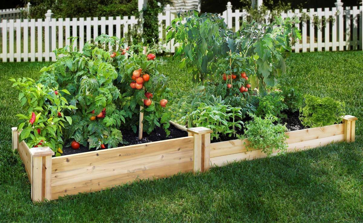 Planting Vegetables in Raised Garden Beds