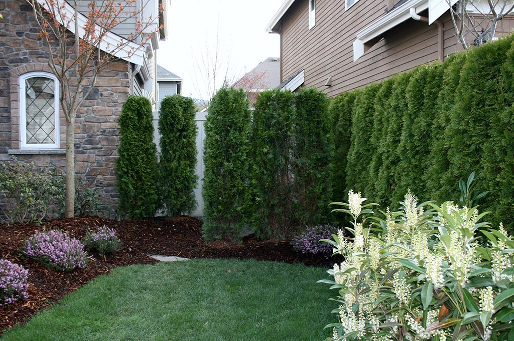 Privacy Landscaping for Small Yards