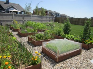 Raised Bed Vegetable Gardening Tips