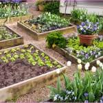 Raised Vegetable Garden Layout 4x8