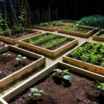 Raised Vegetable Garden Layout Plans