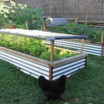 Raised Vegetable Garden Tips
