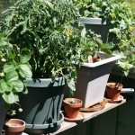 Safe Containers for Vegetable Gardening