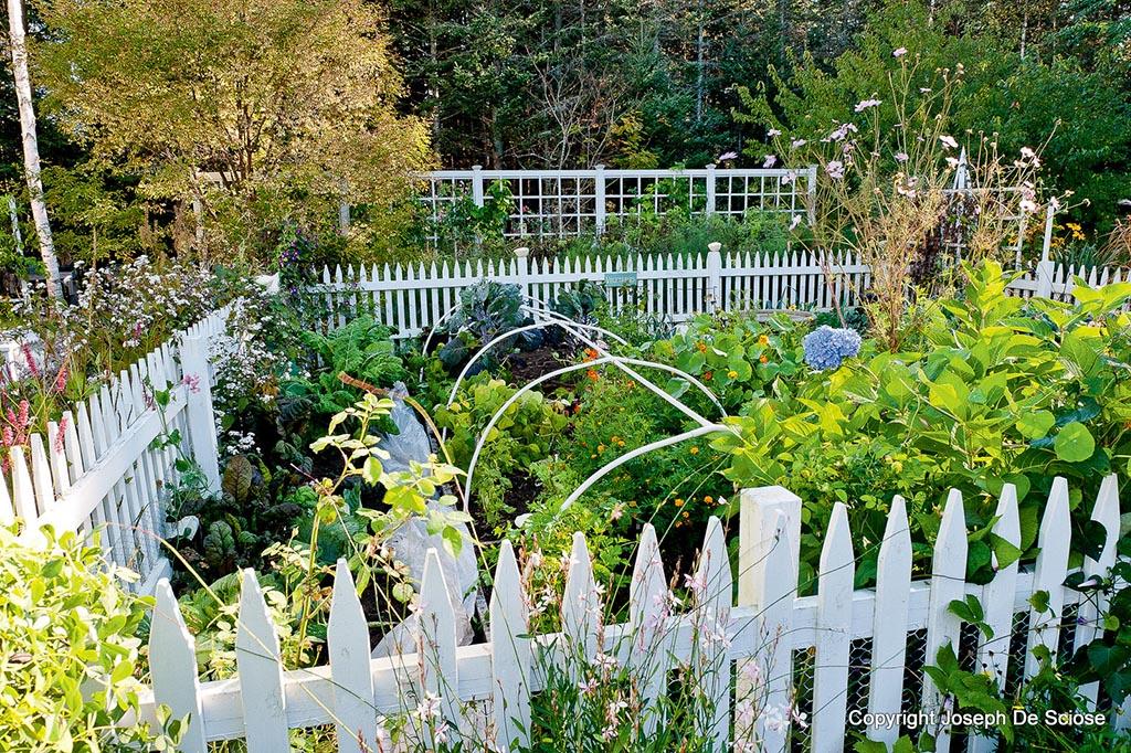 Small Garden Vegetables to Grow 1