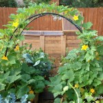 Small Vegetable Garden Plants