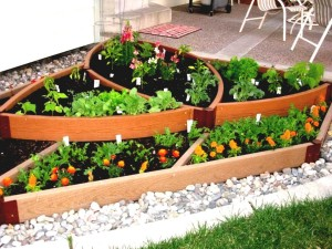 Small Vegetable Gardens for Beginners
