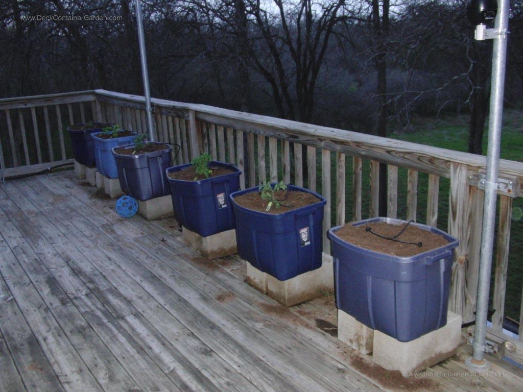 Starting a Patio Vegetable Garden