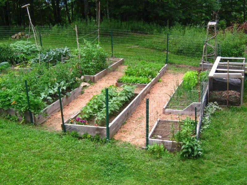 Starting a Raised Bed Organic Vegetable Garden