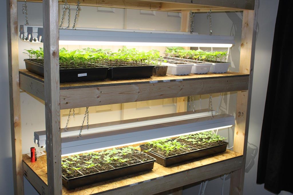 Starting a Vegetable Garden Indoors