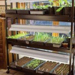 Starting Vegetable Garden Indoors