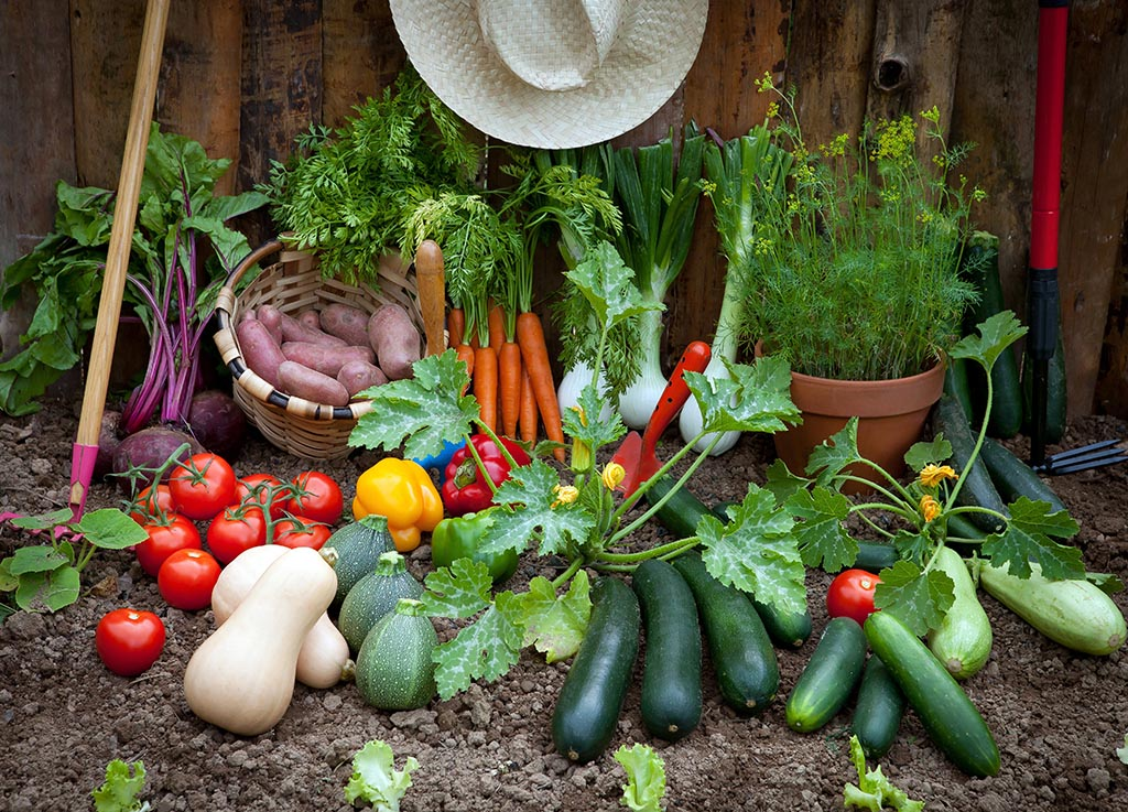 Tips for a Good Vegetable Garden