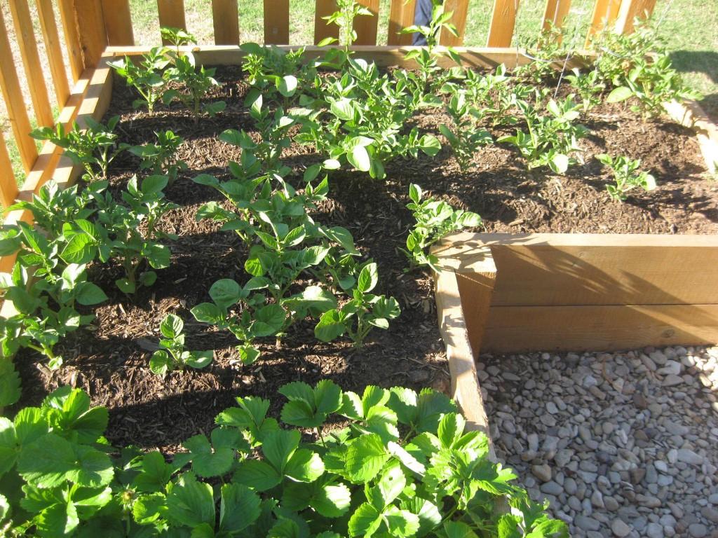 Tips for Vegetable Garden
