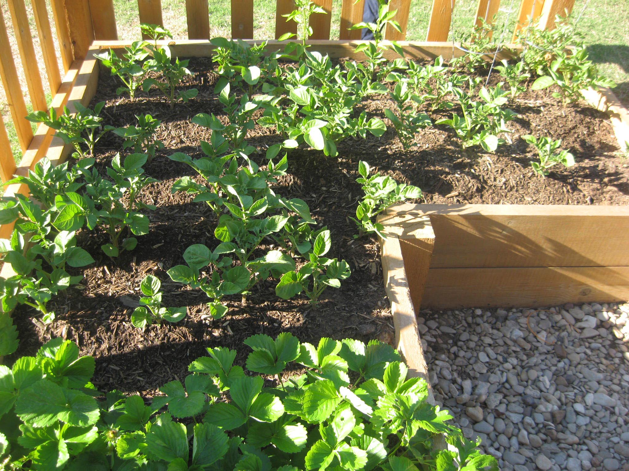 Tips for Vegetable Garden