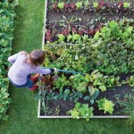Tips on Vegetable Gardens