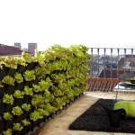 Vegetable Balcony Garden Ideas