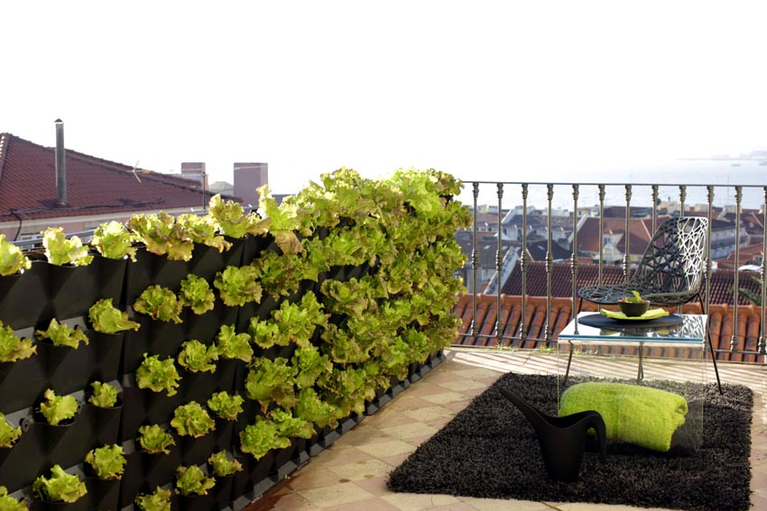 Vegetable Balcony Garden Ideas