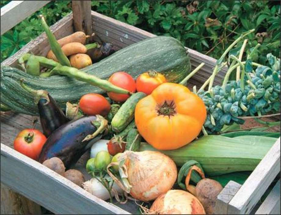 Vegetable Garden Fertilizer Tips