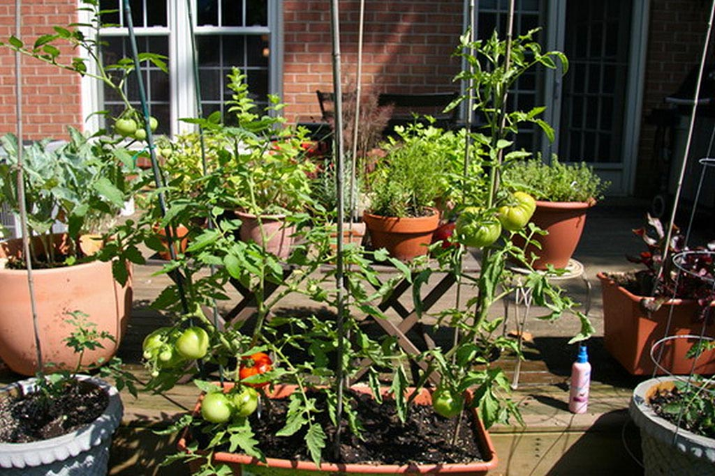 Vegetable Garden for Patio