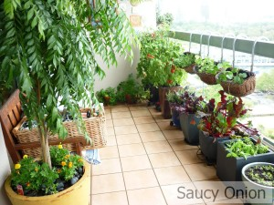 Vegetable Garden in Balcony