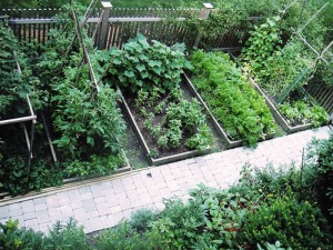 Vegetable Garden Layout Planner Free