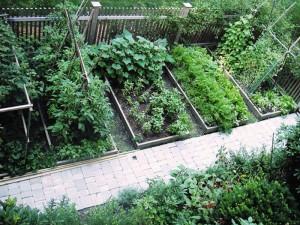 Vegetable Garden Layout Planner Free