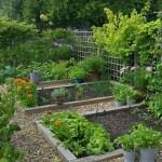 Vegetable Garden Layout Planner Software