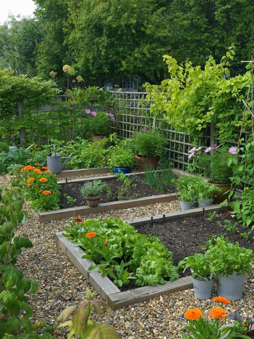 Vegetable Garden Layout Planner Software