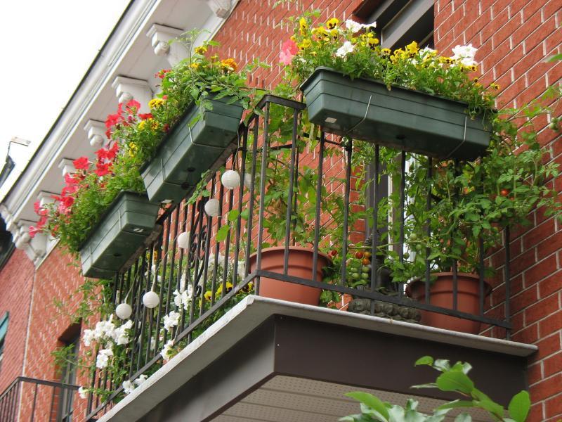 Vegetable Garden on Apartment Balcony
