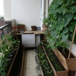 Vegetable Garden on Balcony