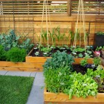 Vegetable Garden Patio Ideas
