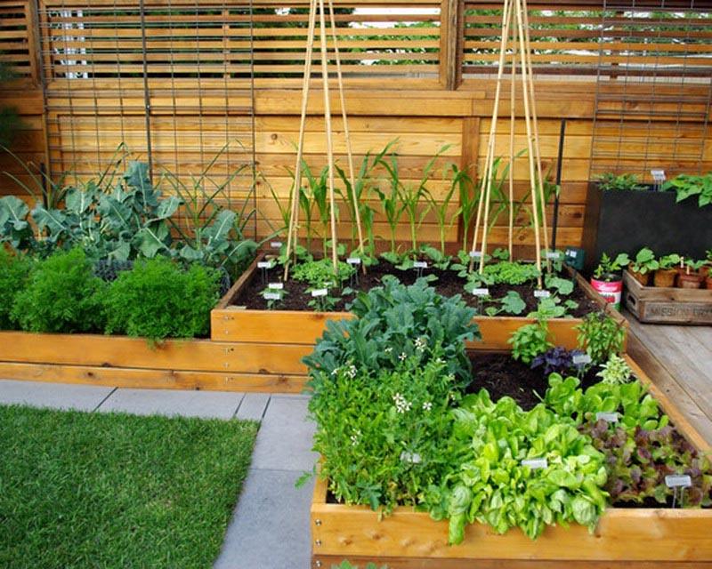 Vegetable Garden Patio Ideas