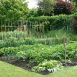 Vegetable Garden Plot Planner