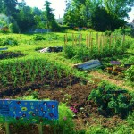 Vegetable Garden Space Planner