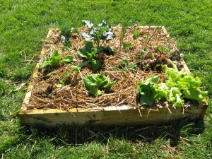 Vegetable Gardening in Small Areas
