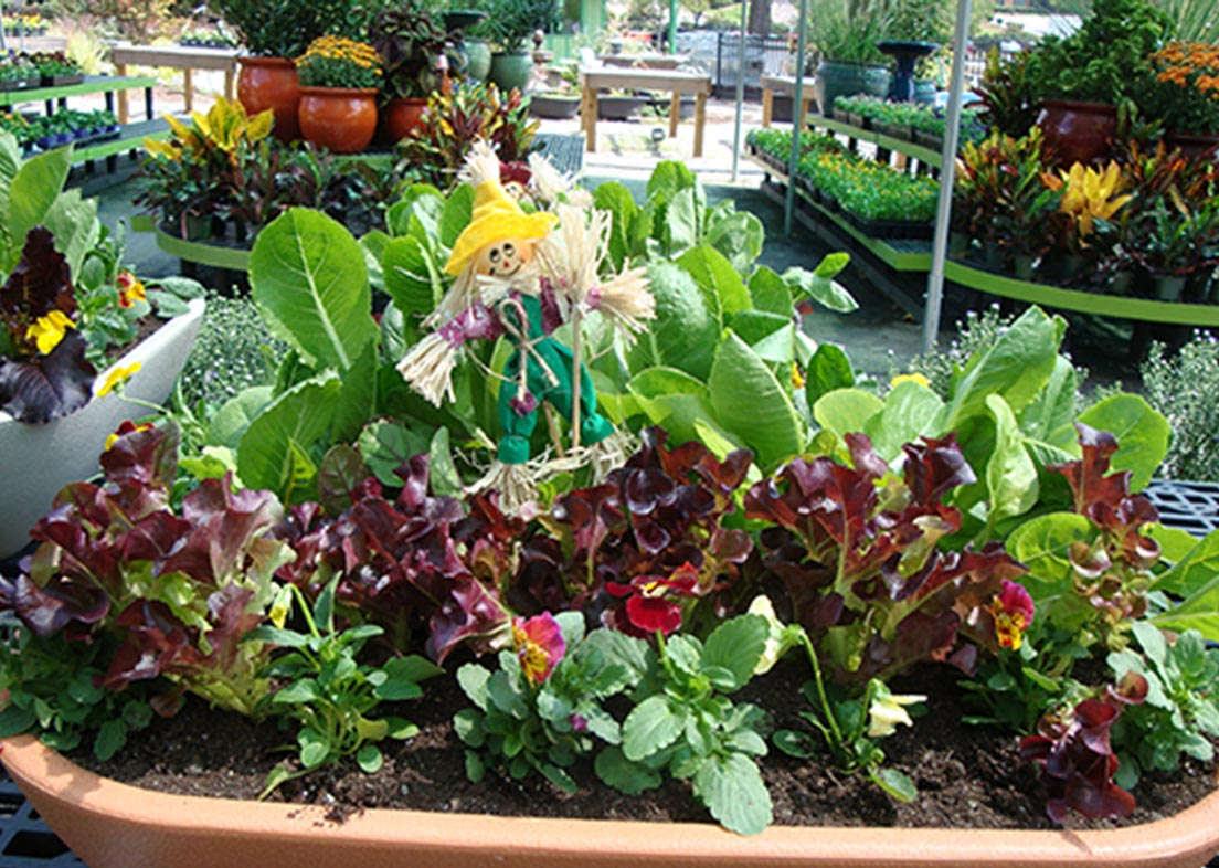 Vegetable Plants for Container Gardening