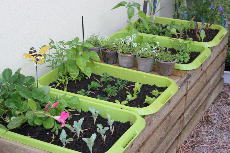 Vegetable Plants for Garden