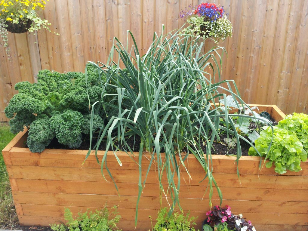 Vegetables for Small Gardens