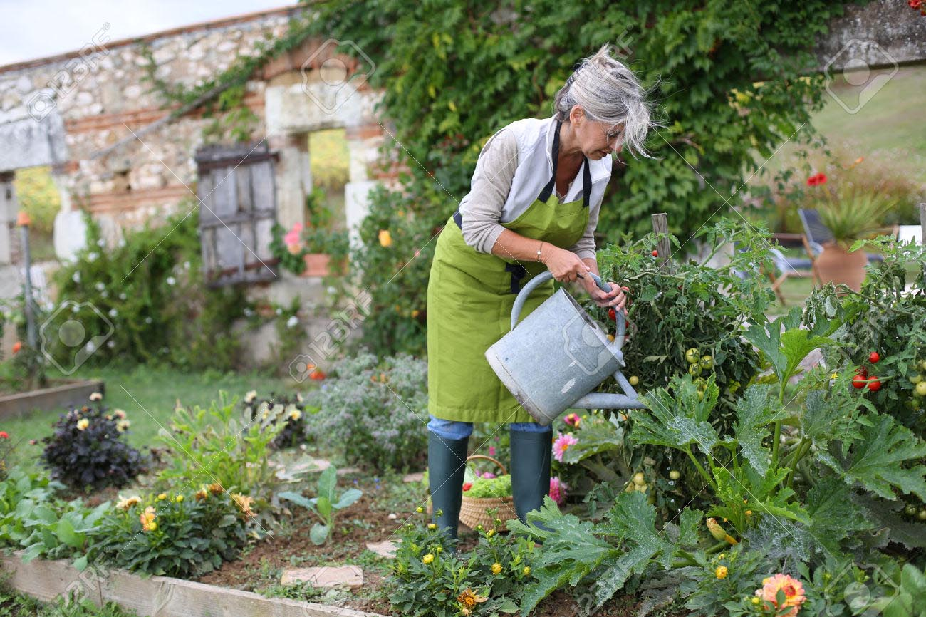 Watering a Vegetable Garden Tips