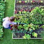 What to Plant Vegetable Gardens for Beginners