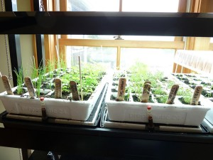 When to Plant Seeds Indoors for Vegetable Garden
